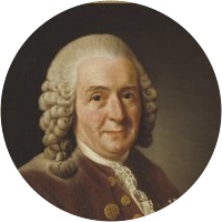 Picture of Carl Linnaeus